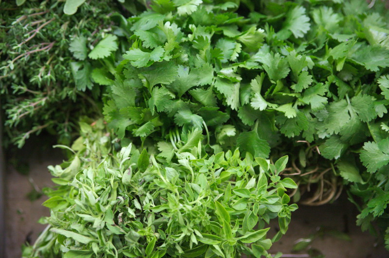 Cilantro & other herbs