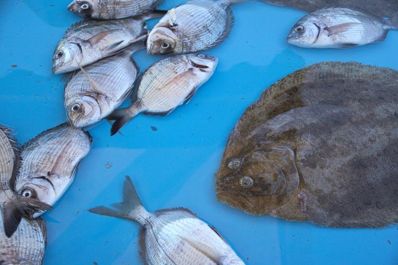 Fish selection