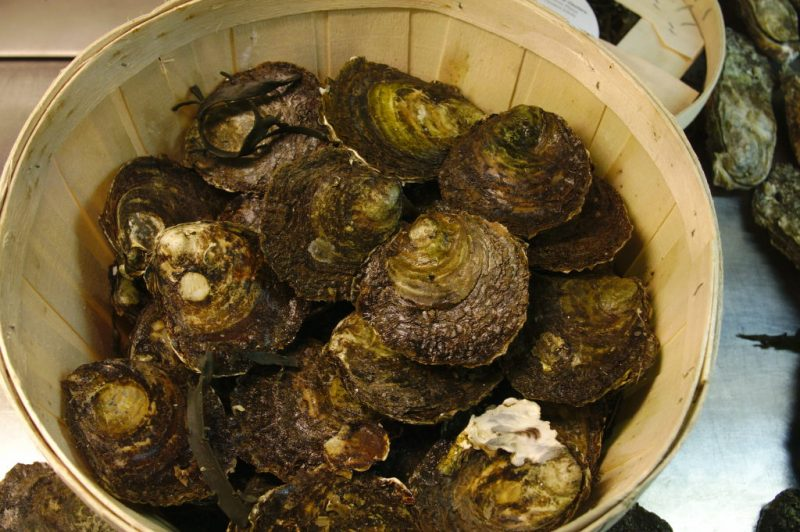 Flat oysters