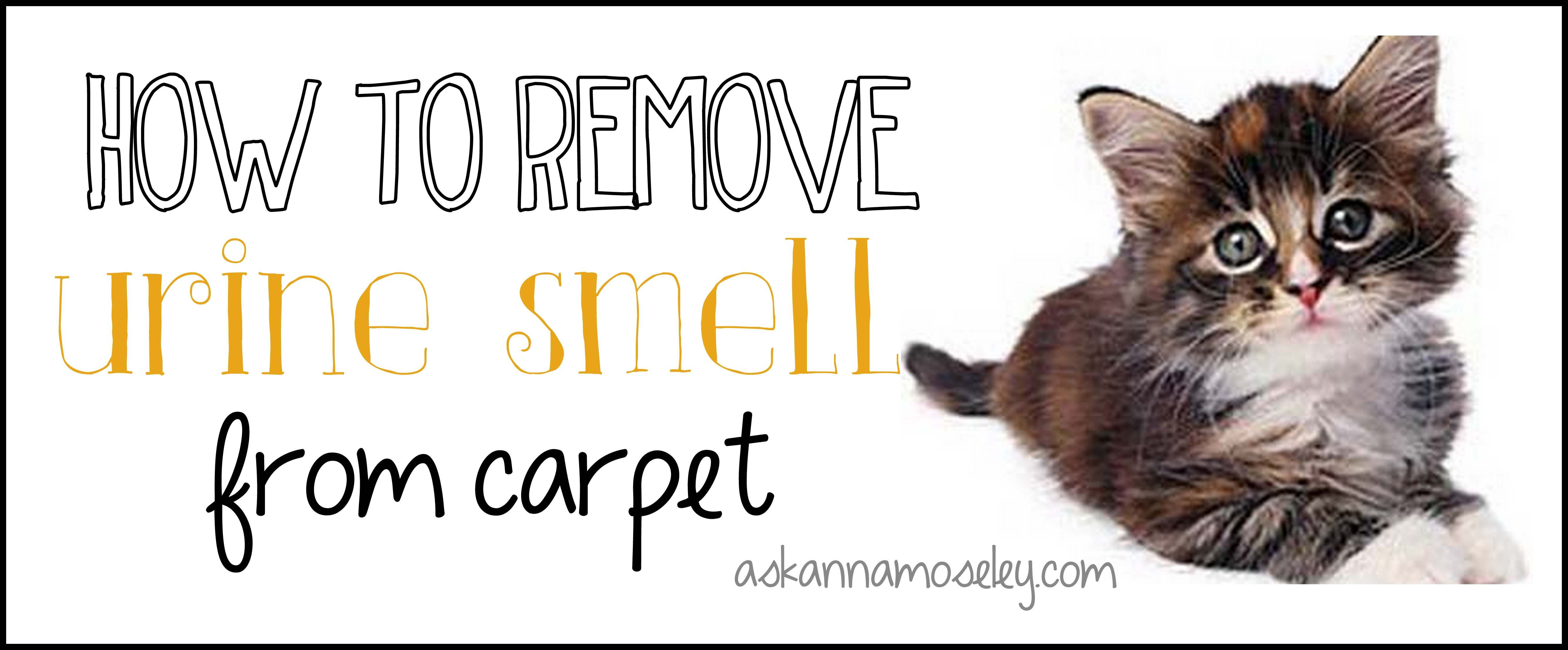 What Takes Cat Pee Smell Out Of Carpet