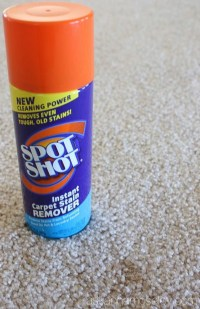 How to get Stains out of Carpet (old, new & pet stains)
