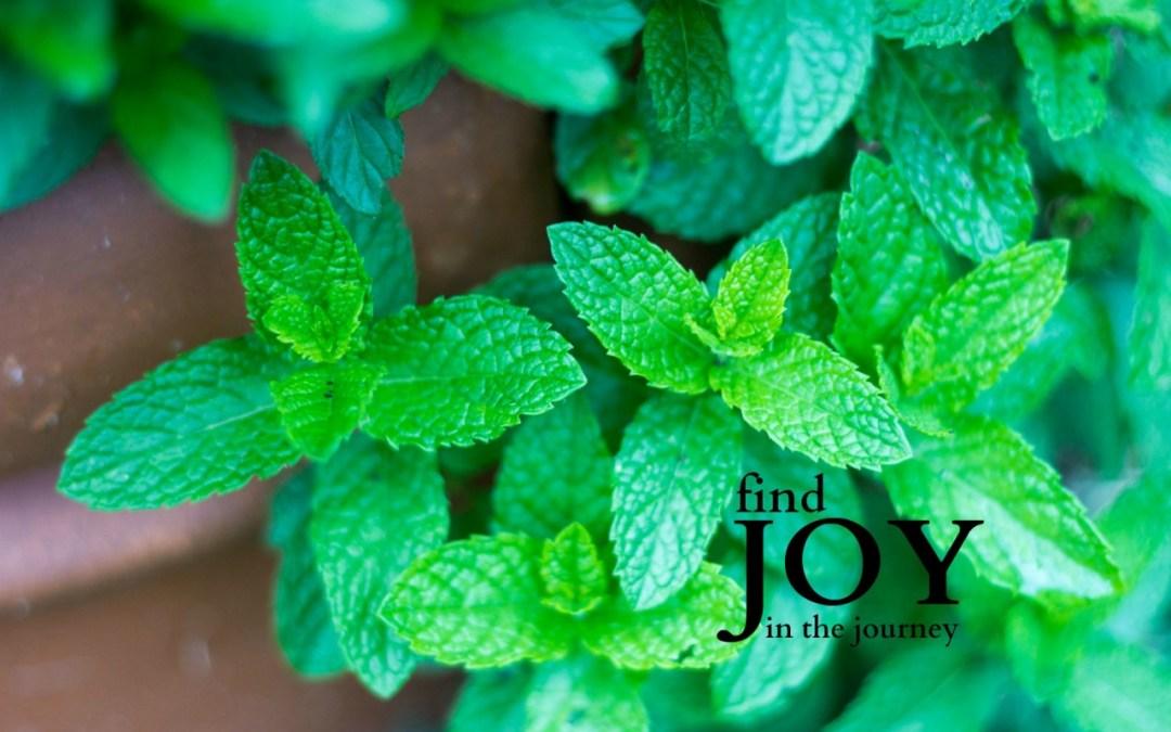 May Joy