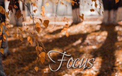A Gratitude Focus | November 2019