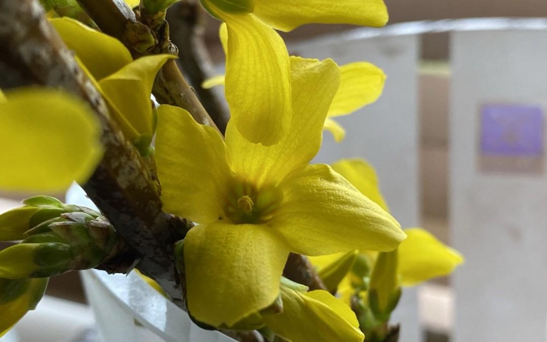 Spring TGIF | 3.20.20