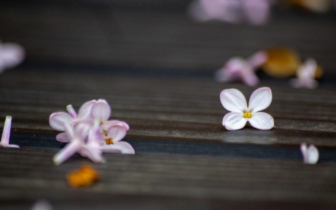 Macro Monday Haiku | 5.4.20
