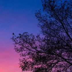 The branches of a tree in a beautiful blue pink background of the setting sun