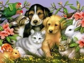Pet Healing and Communication