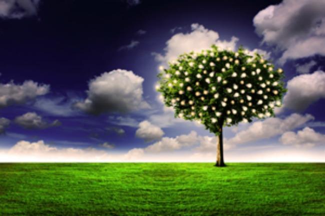 Two Trees Garden Eden