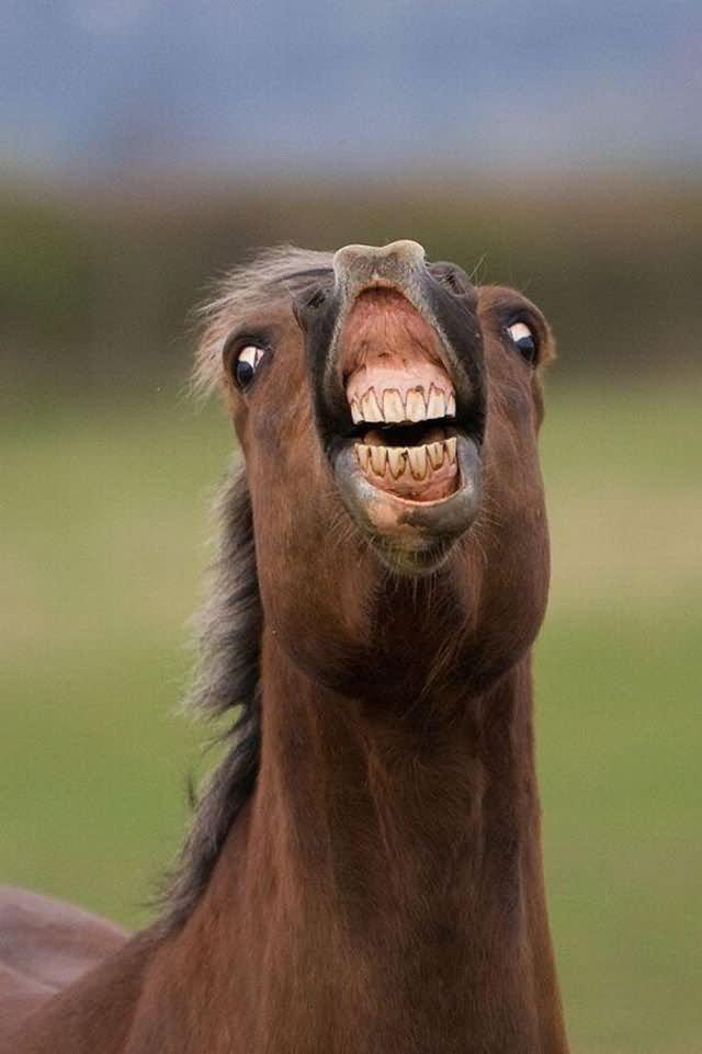 Funny Horse Face : funny, horse, Funny, Horse, Pictures, Images