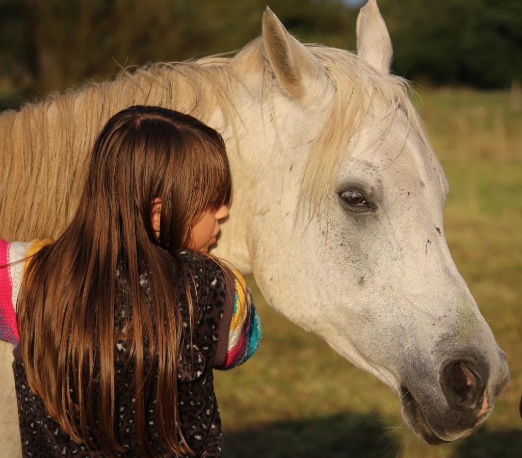 horse-954228_1920