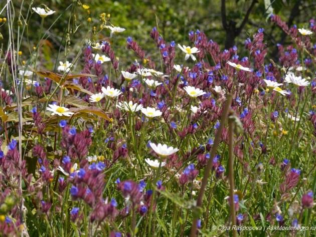 flowers_montenegro