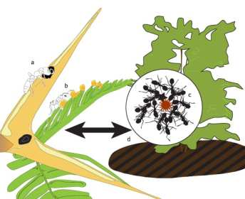 acacia tree and ants mutualism relationship