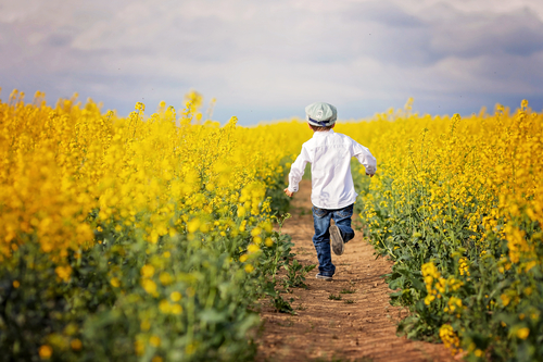 Adorable little boy, running in yellow oilseed rape field