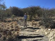 Namibia Safari Pictures 101