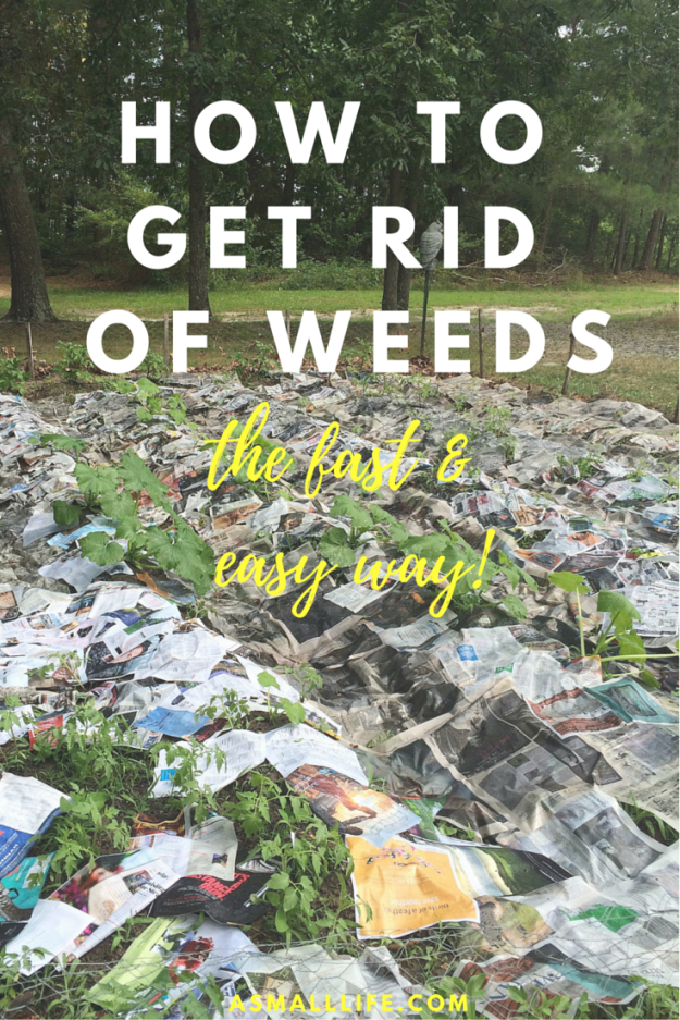 How to get rid of weeds- the fast and easy way!