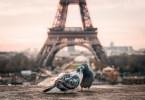 Visitar París