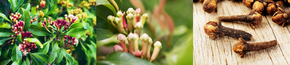 Cloves, A Natural Aphrodisiac for Your Vitality and Stamina