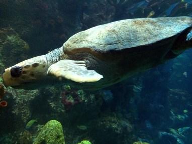 Boston_Turtle