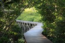07-mangrove