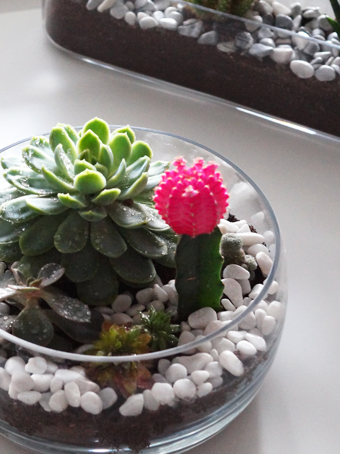 How To Make Your Own Cactus Succulent Terrarium A Snippet Of Life
