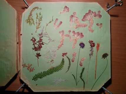 Flower and plant pressings, Hilary Masin