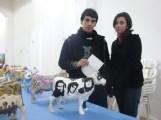 Exposición MiniVacas - 09