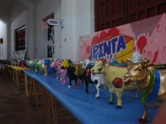 Exposición MiniVacas - 35