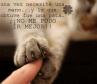 frases-sobre-la-amistad-y-lealtad-de-los-perros