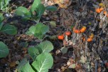 Atípica berenjena y coliflores