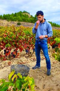 wijnpluk, wijn, oogst, Javea, Costa-Blanca, Casa-Asombrosa, BnB, appartement