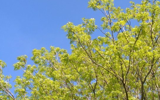 A beautiful green with fresh growing leaves.