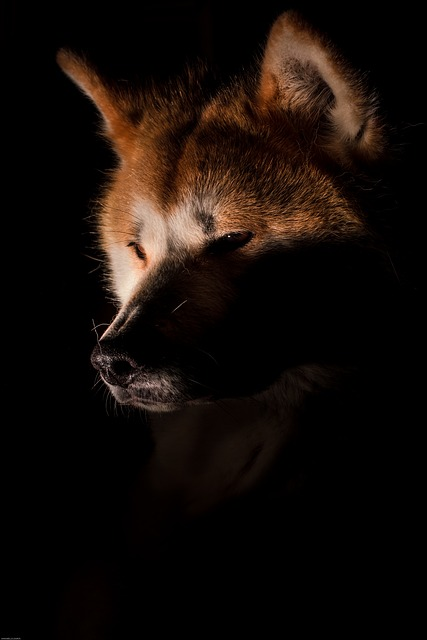 Magda was restless, his father the Corbin the dark fox was getting angry.