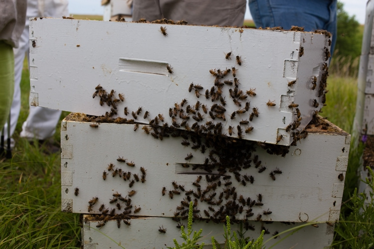 honeybees on the hive