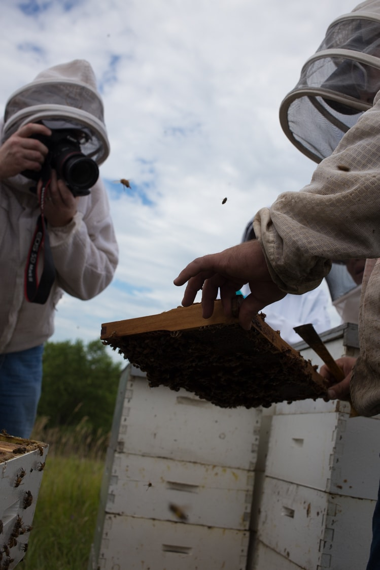 say bees.   bloggers and bees