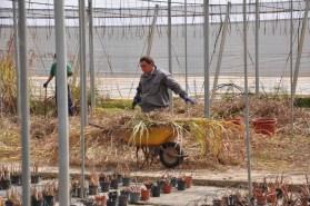 Tareas de mantenimiento del invernadero.