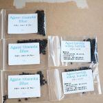 アガベ チタノタ ブルー Agave titanota Blueアガベ ホリダ Agave horridaの種子が届きました。ビニールハウスで地植えして、原産地に合わせた水管理などをして、カッコいい株に作り上げたいと思います。#Agave #horrida #agavetitanota #horrida #agavelove #agavelife #agaveholic #アガベ #アガベチタノタ #アガベの山 #アガベホリダ #アガベ実生 #アガベ地植え