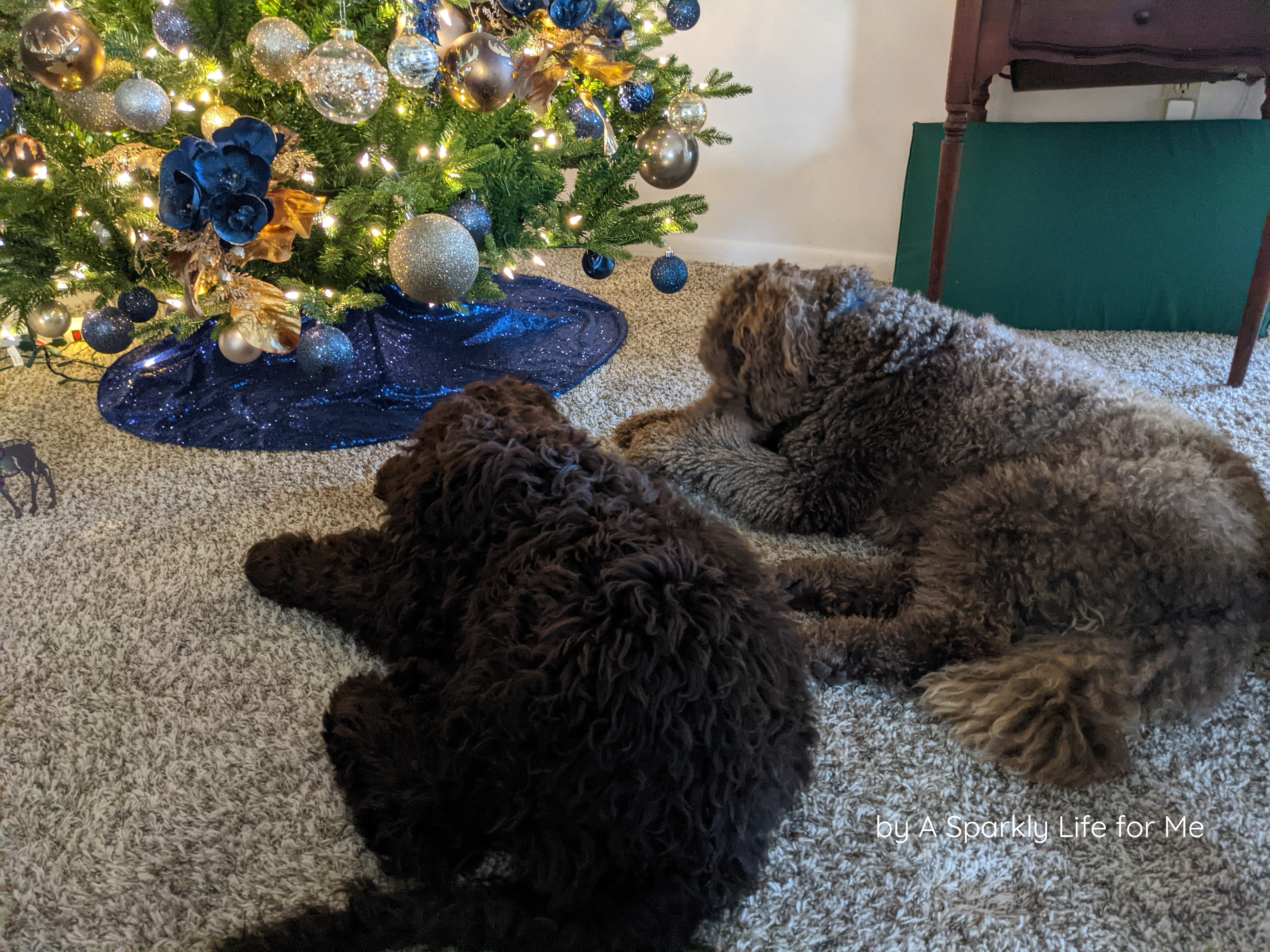 Doodles Wally and Mousse Napping near the Christmas Tree