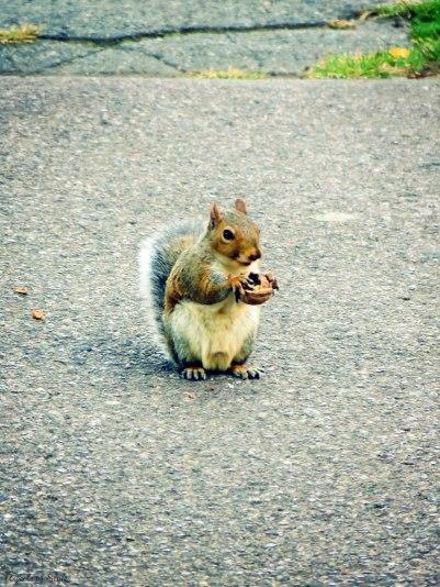 squirrel at Boston Public Garden