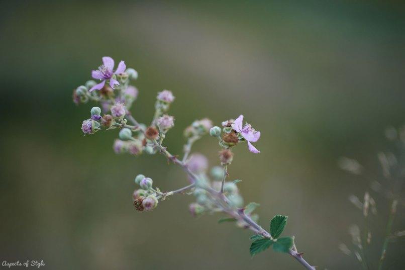 wild flower in Crete, Greece