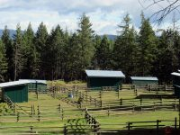 Bales and breakfast with safe secure paddocks and run-in sheds for your horse