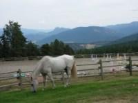 Riding arena and pasture at Aspengrove Country Resort