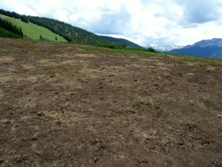 The site of a June 14 wedding on John Miller's property in the Little Annie Basin. He told Pitkin County Commissioners the site would be restored to perfect conditions.