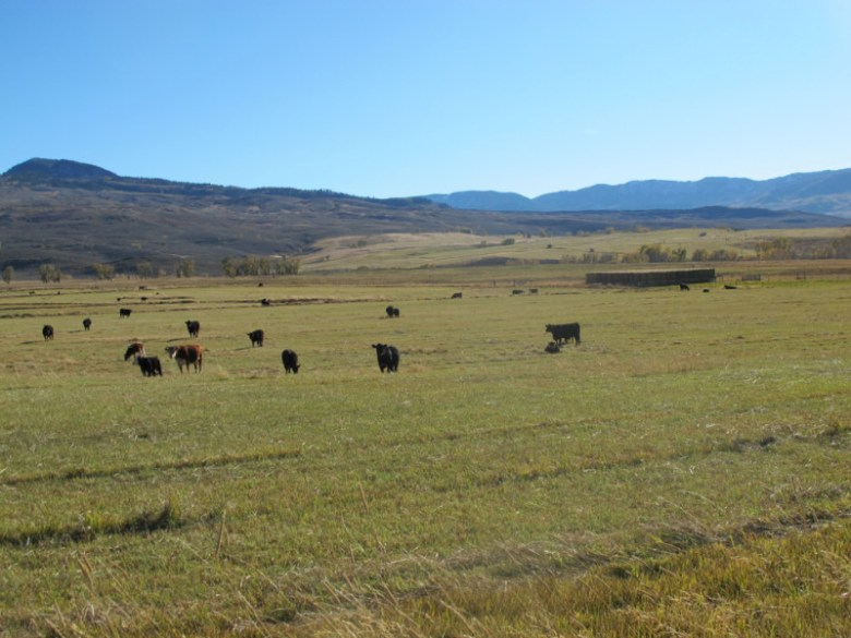 A view of the ranch along the Little Cimarron River now owned by the Western Rivers Conservancy. Water normally used for late-season irrigation on the ranch is expected to now be left in the stream.