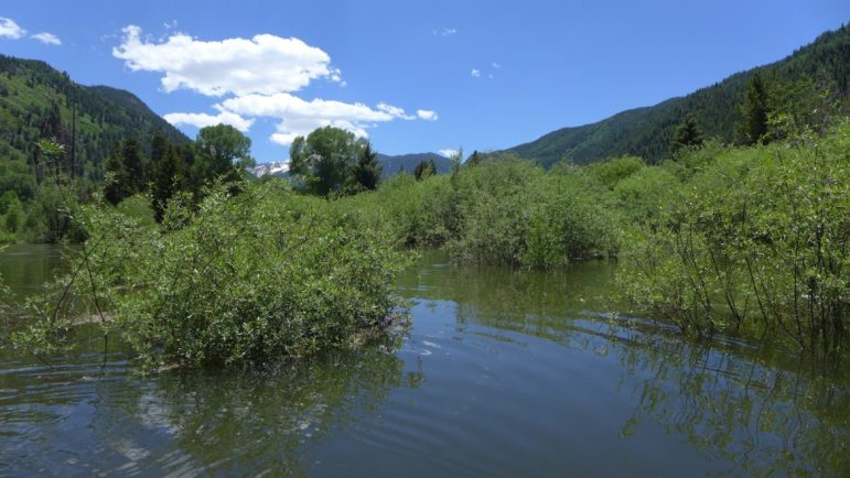 Water in the Stillwater section of the Roaring Fork River swelled over the river's banks on Friday after the Twin Lakes Tunnel was closed for two-to-three weeks on Thursday. The river hit 927 cfs early Friday morning. Last year on June 18 it hit 1,680 cfs.