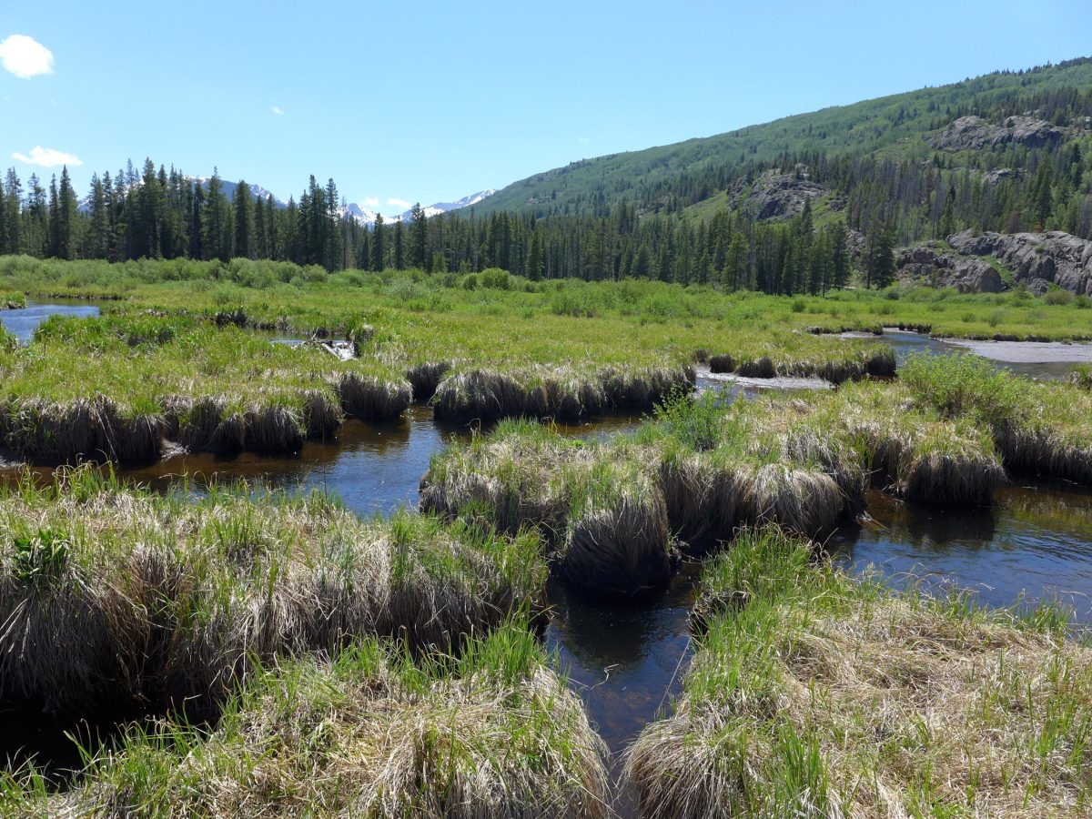 Whitney wetlands