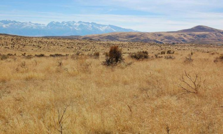 Picts-Twin-River-Ranchos-017-039-003-2.27-Acres-1-750x450