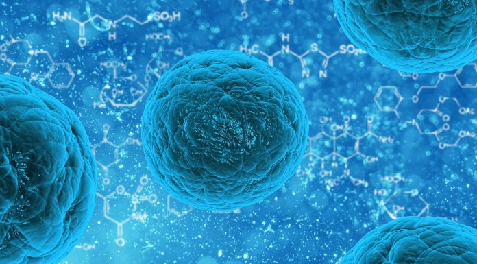 White blood cells stained blue | Aspioneer