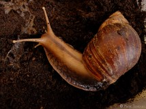 Mój ślimak Godzilla / My pet-snail Godzilla