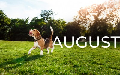 """August """"National Day"""" Campaign Ideas for Local Advertisers"""