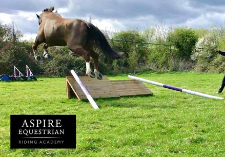 Top Tip: How to teach your horse to jump air
